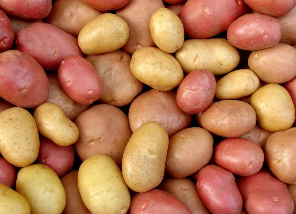 Potatoes harvested from a victory garden