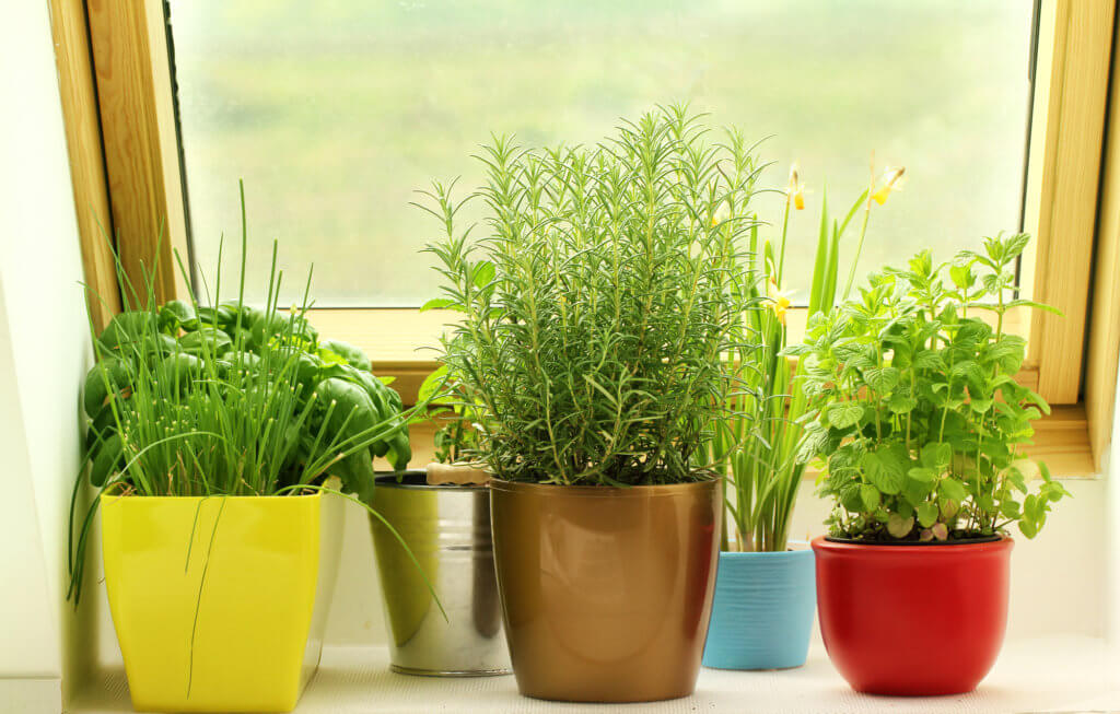 pretty pots of herbs growing in indoor garden