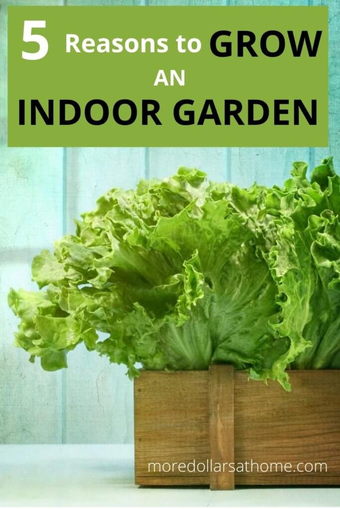 lettuce growing in a wood box in an indoor garden